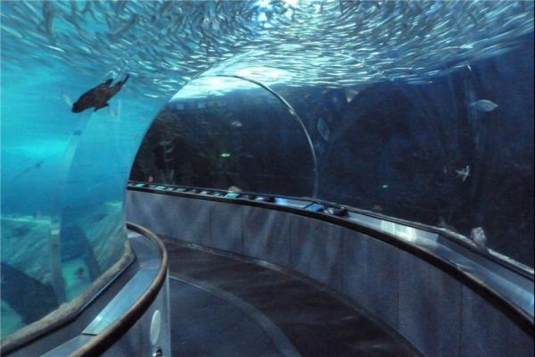 تصویر شماره تونل آکواریم در اصفهان